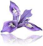 IRIS Floral POS