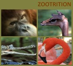 Zootrition Software